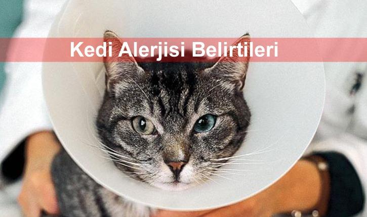 Bu görsel boş bir alt niteliğe sahip; dosya adı kedi-alerjisi-belirtileri.jpg