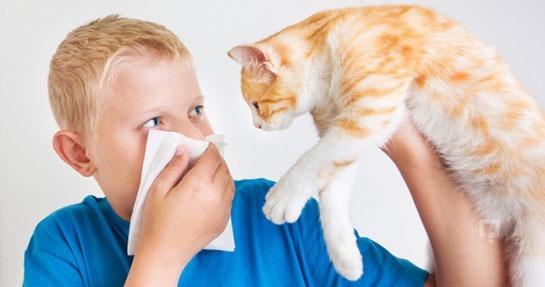 Bu görsel boş bir alt niteliğe sahip; dosya adı kedi-alerjisi.jpg